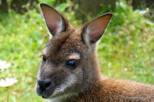 Dudley Zoo_062018 (16)