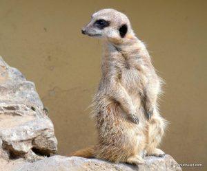 Dudley Zoo_062018 (17)