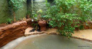 Dudley Zoo_062018 (23)