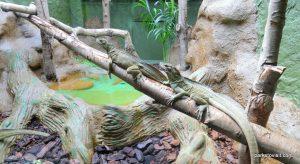Dudley Zoo_062018 (25)