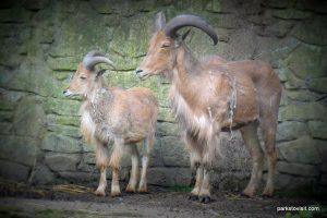 Dudley Zoo_062018 (31)