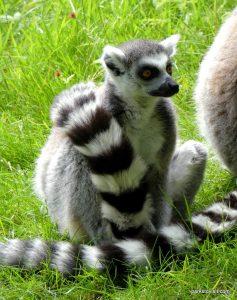 Dudley Zoo_062018 (39)