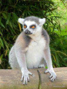 Dudley Zoo_062018 (40)