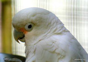 Dudley Zoo_062018 (46)