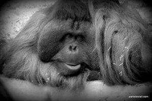 Dudley Zoo_062018 (54)