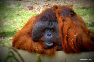 Dudley Zoo_062018 (55)