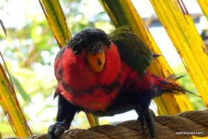 Dudley Zoo_062018 (58)