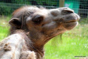 Dudley Zoo_062018 (60)