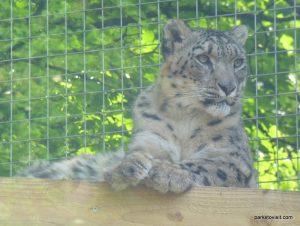 Dudley Zoo_062018 (61)