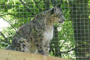 Dudley Zoo_062018 (62)