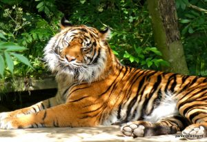 Dudley Zoo_062018 (63)