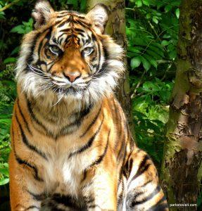 Dudley Zoo_062018 (64)