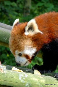 Dudley Zoo_062018 (66)