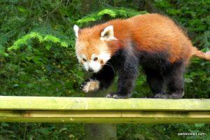 Dudley Zoo_062018 (67)