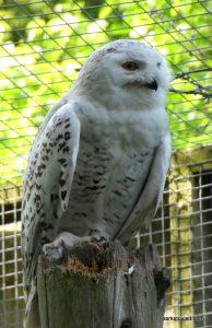 Dudley Zoo_062018 (70)