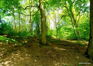 Etherow_Country_park_Stockport_20160515 (15)