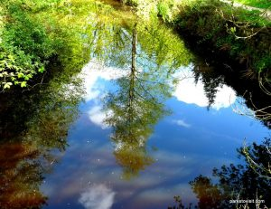 Etherow_Country_park_Stockport_20160515 (19)