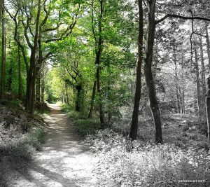 Etherow_Country_park_Stockport_20160515 (31)