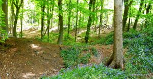 Etherow_Country_park_Stockport_20160515 (32)