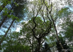 Etherow_Country_park_Stockport_20160515 (36)