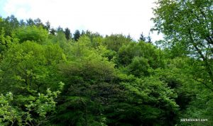 Etherow_Country_park_Stockport_20160515 (38)