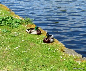 Etherow_Country_park_Stockport_20160515 (43)