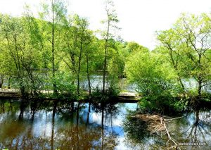 Etherow_Country_park_Stockport_20160515 (8)