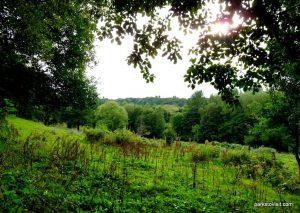 Reddish_Vale_Country_Park_20160901 (194)