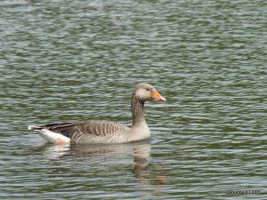 Roman Lakes Leisure Park_201706 (19)