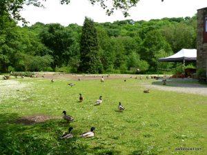 Roman Lakes Leisure Park_201706 (21)