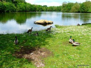 Roman Lakes Leisure Park_201706 (22)