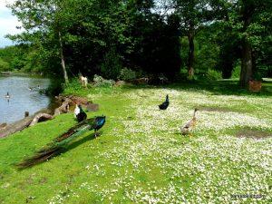 Roman Lakes Leisure Park_201706 (29)