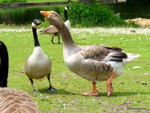 Roman Lakes Leisure Park_201706 (54)