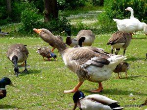 Roman Lakes Leisure Park_201706 (55)