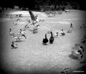 Roman Lakes Leisure Park_201706 (56)