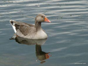 Roman Lakes Leisure Park_201706 (59)