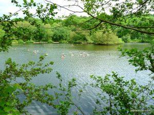 Roman Lakes Leisure Park_201706 (64)
