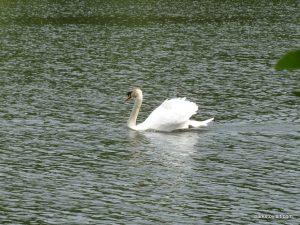 Roman Lakes Leisure Park_201706 (65)
