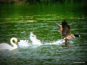 Roman Lakes Leisure Park_201706 (66)