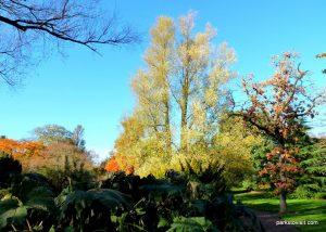 Royal Botanic Garden Edinburgh_201711 (4)
