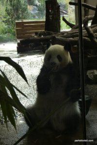 Berlin Zoo_092018 (10)