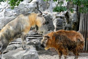 Berlin Zoo_092018 (108)