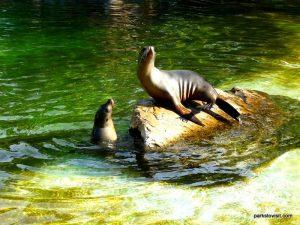 Berlin Zoo_092018 (120)