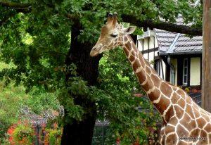 Berlin Zoo_092018 (133)
