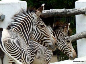 Berlin Zoo_092018 (155)