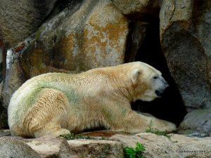 Berlin Zoo_092018 (157)
