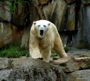 Berlin Zoo_092018 (158)