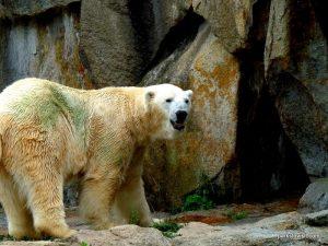 Berlin Zoo_092018 (159)