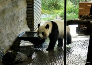 Berlin Zoo_092018 (8)