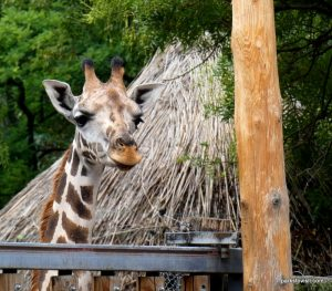 Budapest Zoo_092018 (32)